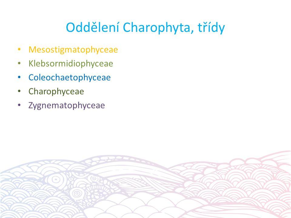 Oddělení Charophyta, třídy Mesostigmatophyceae Klebsormidiophyceae Coleochaetophyceae Charophyceae Zygnematophyceae