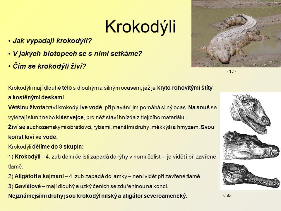 Krokodýli Jak vypadají krokodýli. V jakých biotopech se s nimi setkáme.