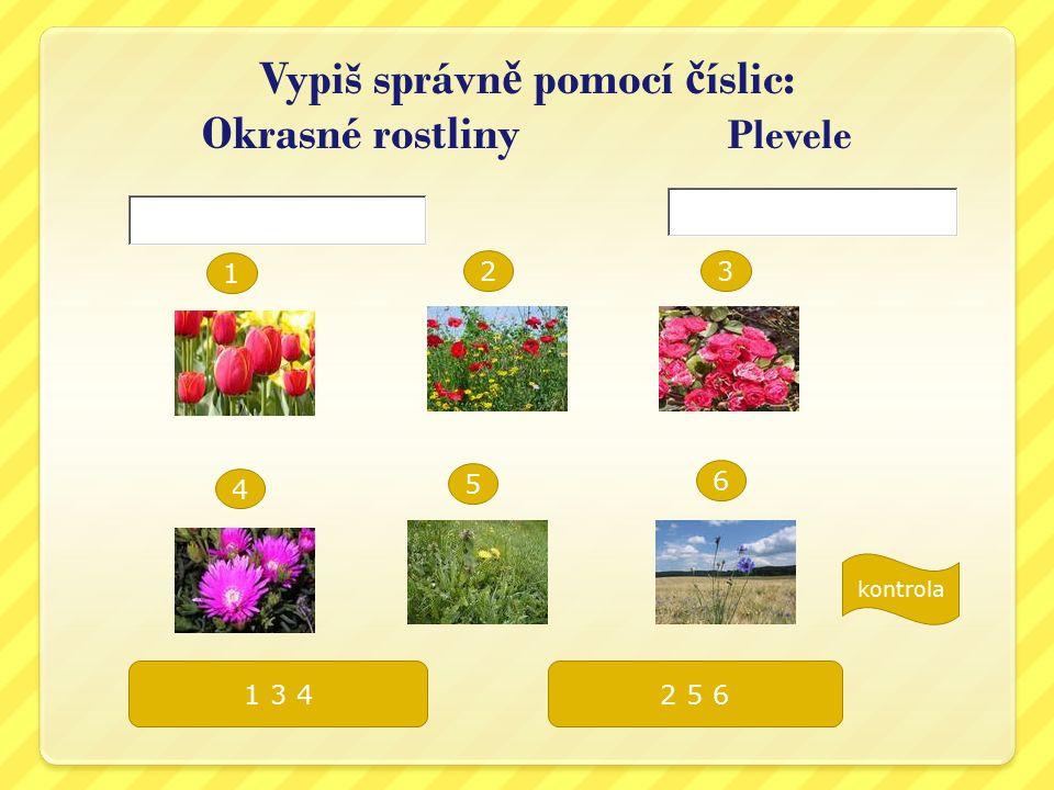 Lé č ivé rostliny Vysvětli: Zvýrazni léčivé byliny.
