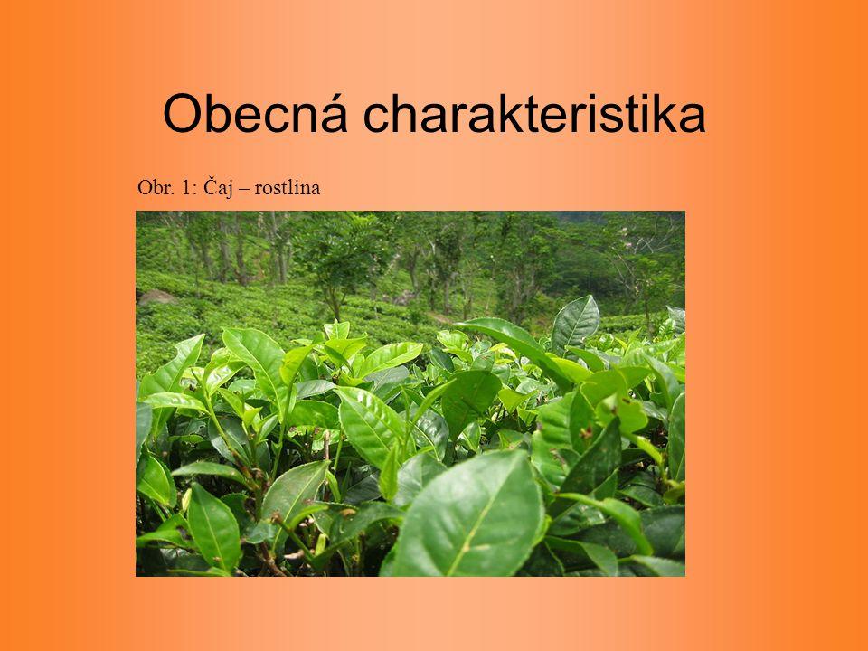 Obecná charakteristika Obr. 1: Čaj – rostlina