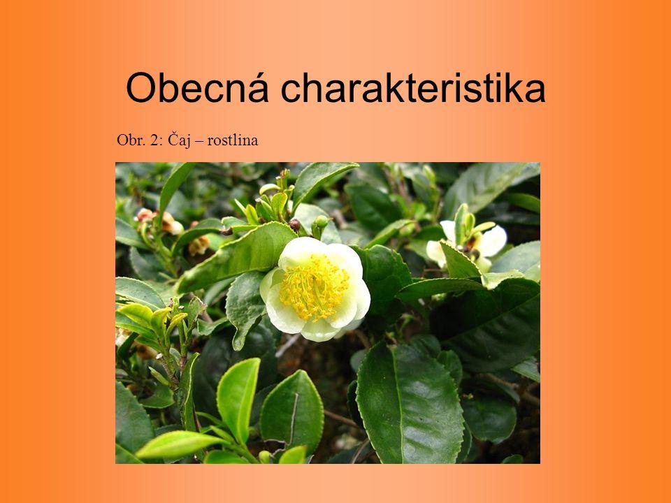 Obecná charakteristika Obr. 2: Čaj – rostlina