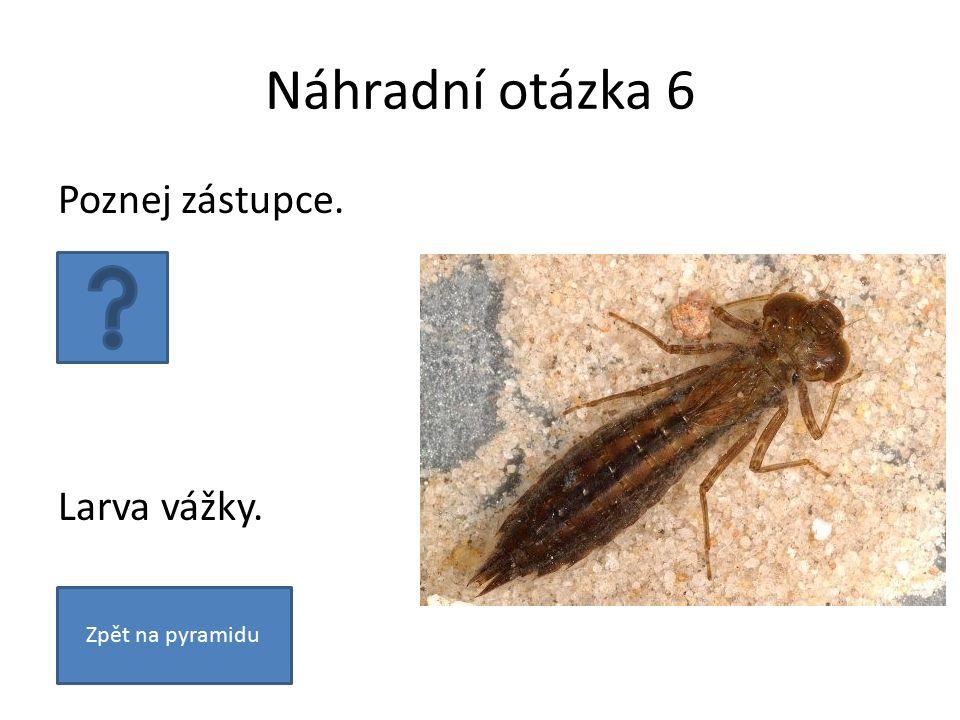Náhradní otázka 6 Poznej zástupce. Larva vážky. Zpět na pyramidu