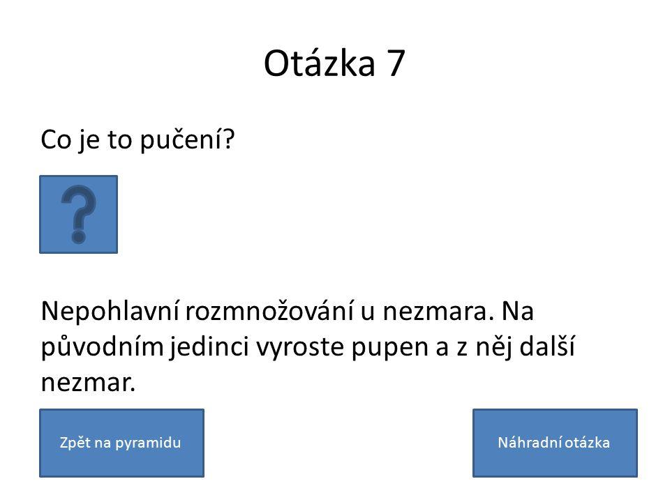 Otázka 7 Co je to pučení? Nepohlavní rozmnožování u nezmara. Na původním jedinci vyroste pupen a z něj další nezmar. Zpět na pyramiduNáhradní otázka