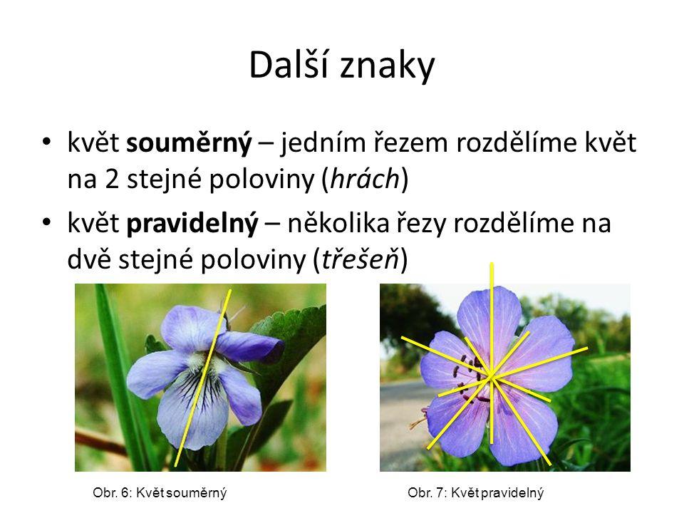 Další znaky květ souměrný – jedním řezem rozdělíme květ na 2 stejné poloviny (hrách) květ pravidelný – několika řezy rozdělíme na dvě stejné poloviny
