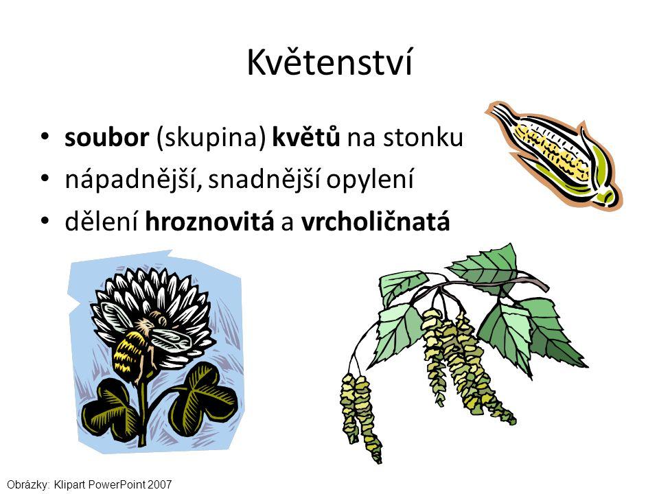 Květenství soubor (skupina) květů na stonku nápadnější, snadnější opylení dělení hroznovitá a vrcholičnatá Obrázky: Klipart PowerPoint 2007