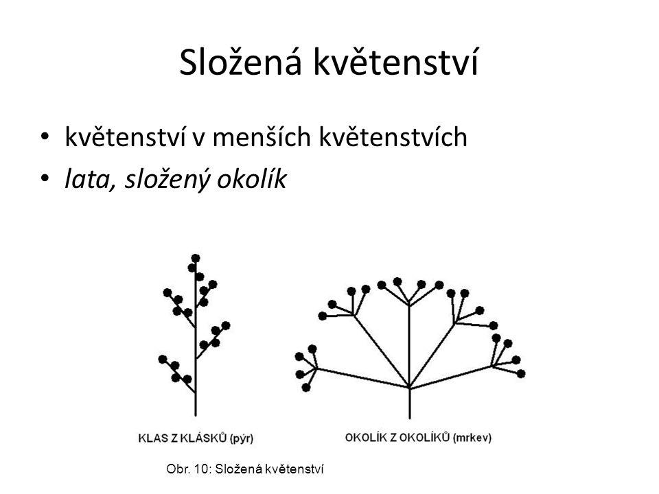 Složená květenství květenství v menších květenstvích lata, složený okolík Obr. 10: Složená květenství