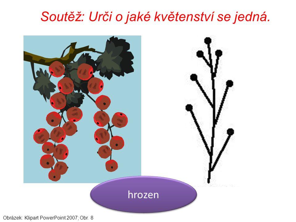 Soutěž: Urči o jaké květenství se jedná. hrozen Obrázek: Klipart PowerPoint 2007; Obr. 8