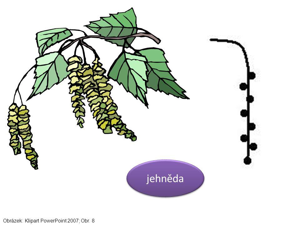 jehněda Obrázek: Klipart PowerPoint 2007; Obr. 8