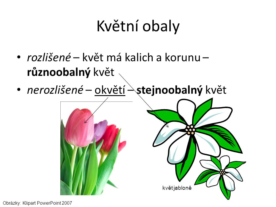 Květní obaly rozlišené – květ má kalich a korunu – různoobalný květ nerozlišené – okvětí – stejnoobalný květ Obrázky: Klipart PowerPoint 2007 květ jabloně