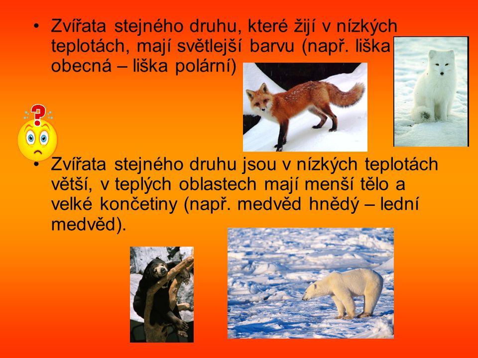 Zvířata stejného druhu, které žijí v nízkých teplotách, mají světlejší barvu (např.