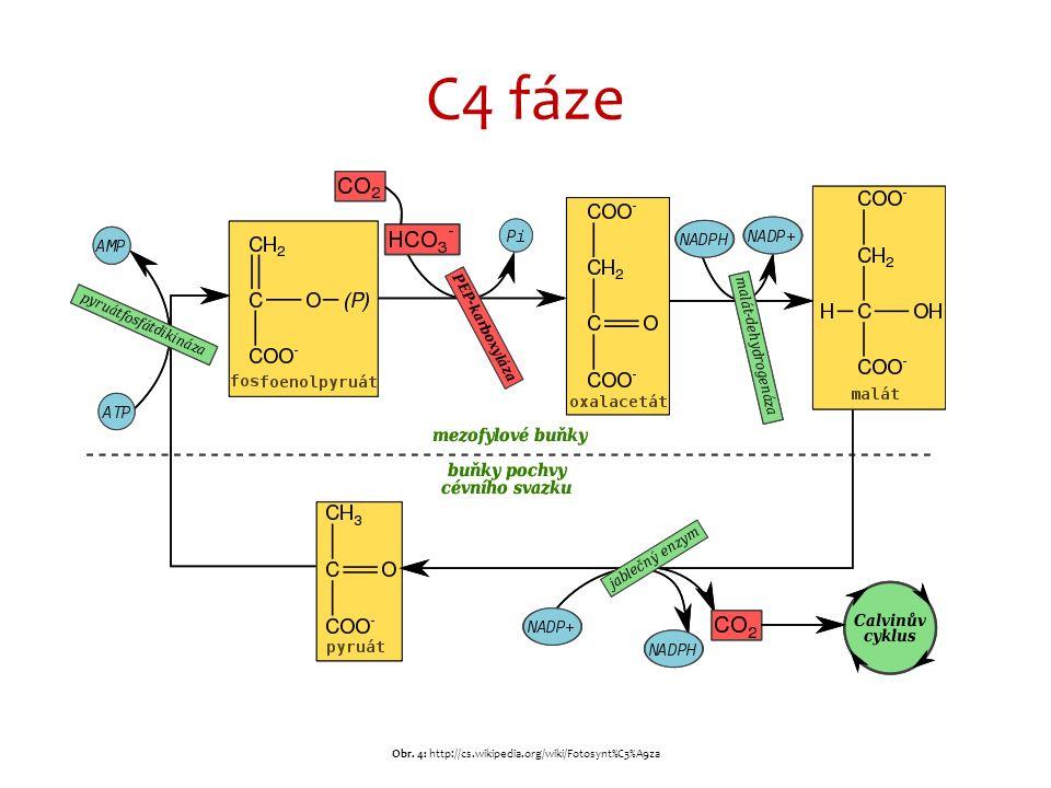 C4 fáze Obr. 4: http://cs.wikipedia.org/wiki/Fotosynt%C3%A9za