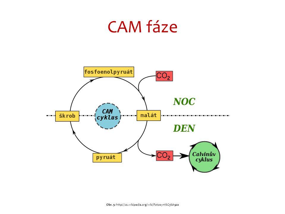 CAM fáze Obr. 5: http://cs.wikipedia.org/wiki/Fotosynt%C3%A9za