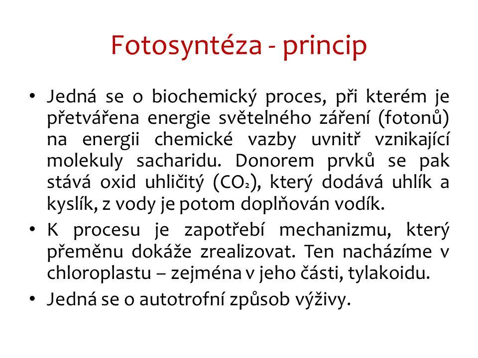 Jedná se o biochemický proces, při kterém je přetvářena energie světelného záření (fotonů) na energii chemické vazby uvnitř vznikající molekuly sacharidu.