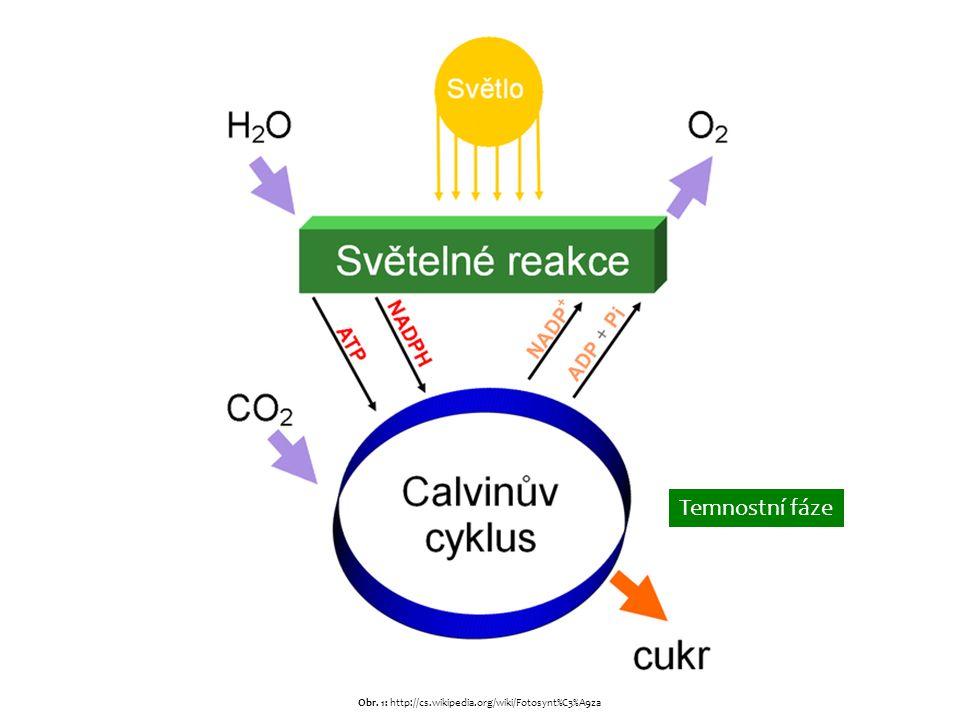 Temnostní fáze Temnostní fází rozumíme procesy vedoucí k syntéze glukózy z předem připravených produktů ze světelné fáze (NADPH a ATP) a z oxidu uhličitého, pomocí něhož se zapisuje chemická energie vázaná v přenašečích do nově vznikajících vazeb mezi uhlíky v sacharidu.