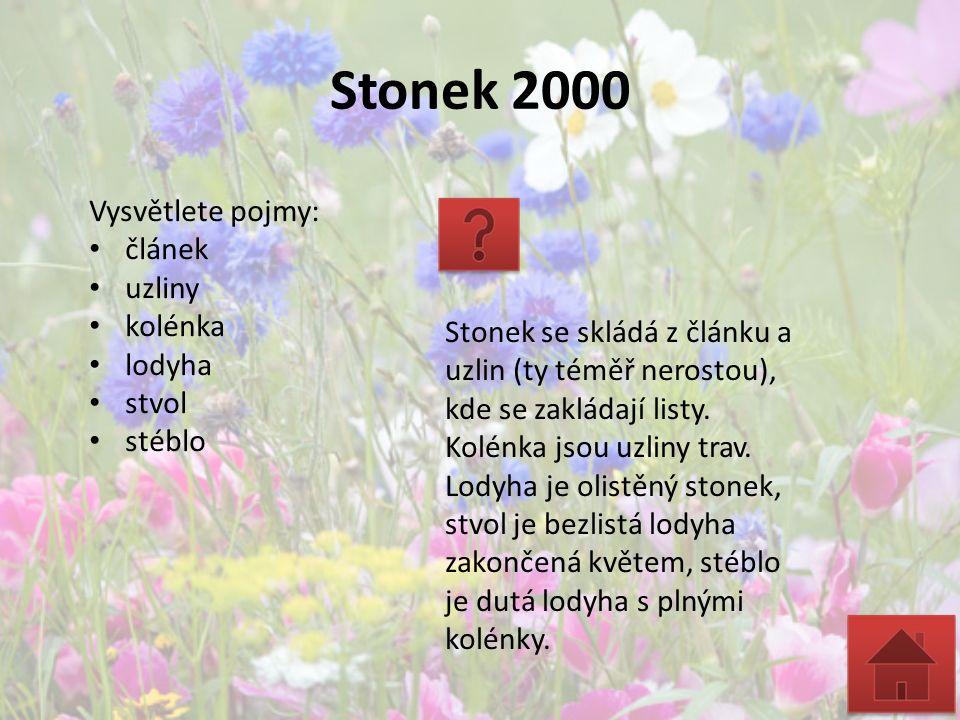 Stonek 2000 Vysvětlete pojmy: článek uzliny kolénka lodyha stvol stéblo Stonek se skládá z článku a uzlin (ty téměř nerostou), kde se zakládají listy.