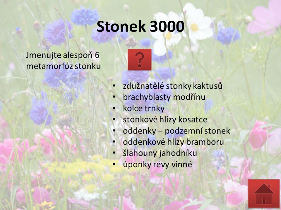 Stonek 3000 Jmenujte alespoň 6 metamorfóz stonku zdužnatělé stonky kaktusů brachyblasty modřínu kolce trnky stonkové hlízy kosatce oddenky – podzemní
