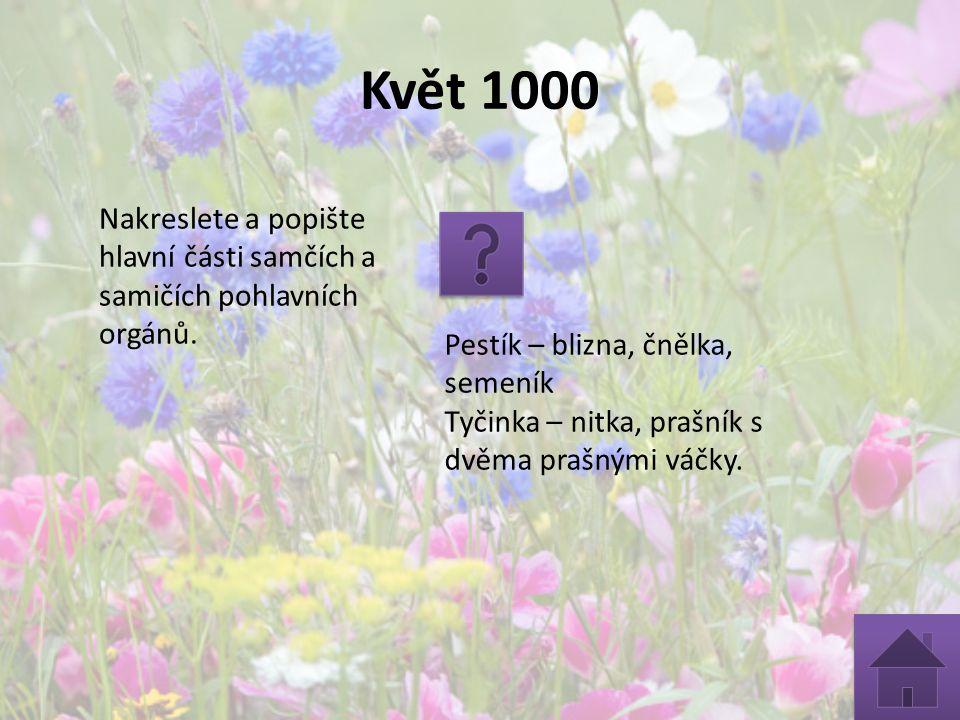 Květ 1000 Nakreslete a popište hlavní části samčích a samičích pohlavních orgánů. Pestík – blizna, čnělka, semeník Tyčinka – nitka, prašník s dvěma pr