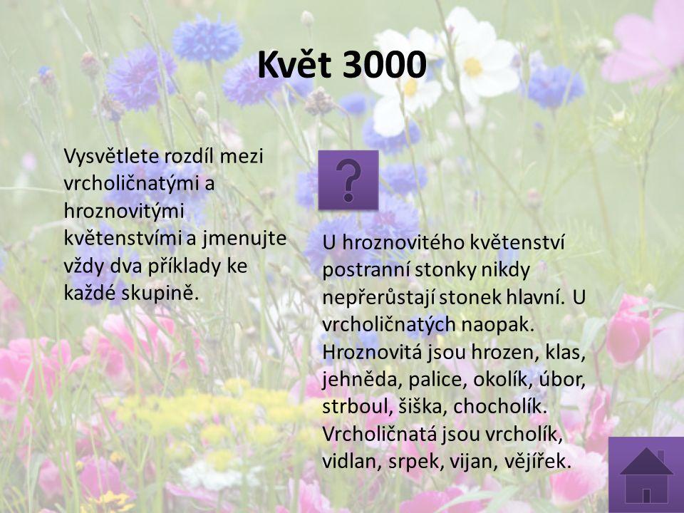 Květ 3000 Vysvětlete rozdíl mezi vrcholičnatými a hroznovitými květenstvími a jmenujte vždy dva příklady ke každé skupině. U hroznovitého květenství p