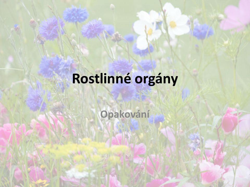 Rostlinné orgány Opakování