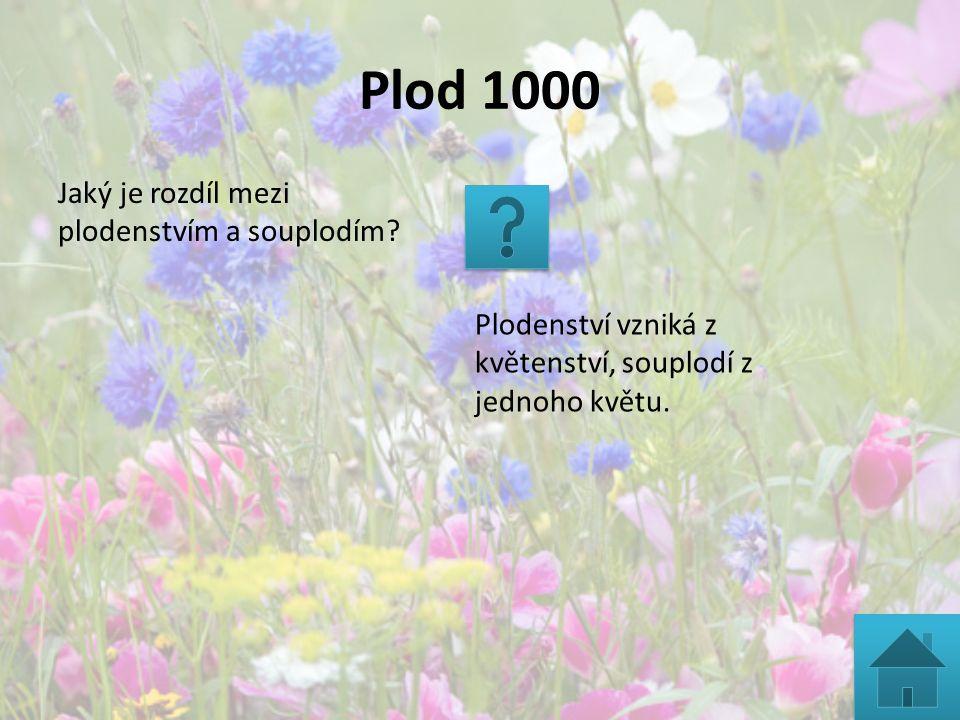 Plod 1000 Jaký je rozdíl mezi plodenstvím a souplodím? Plodenství vzniká z květenství, souplodí z jednoho květu.