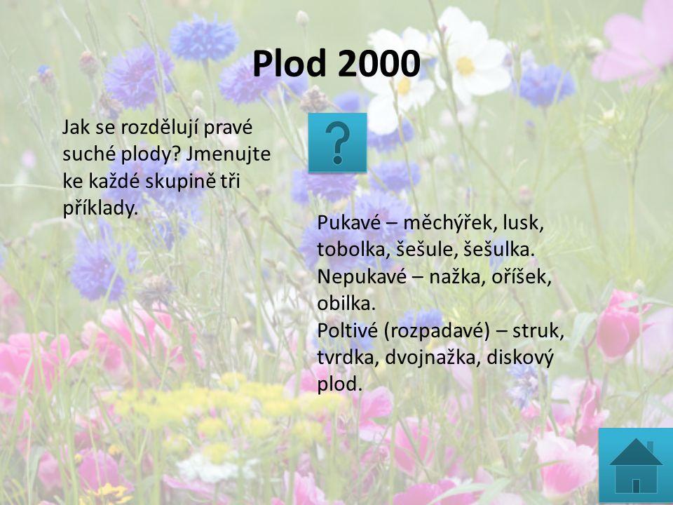 Plod 2000 Jak se rozdělují pravé suché plody? Jmenujte ke každé skupině tři příklady. Pukavé – měchýřek, lusk, tobolka, šešule, šešulka. Nepukavé – na