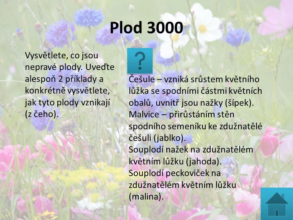 Plod 3000 Vysvětlete, co jsou nepravé plody. Uveďte alespoň 2 příklady a konkrétně vysvětlete, jak tyto plody vznikají (z čeho). Češule – vzniká srůst