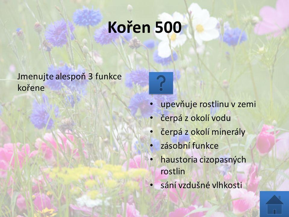 Kořen 500 Jmenujte alespoň 3 funkce kořene upevňuje rostlinu v zemi čerpá z okolí vodu čerpá z okolí minerály zásobní funkce haustoria cizopasných ros