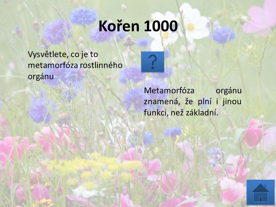 Kořen 1000 Vysvětlete, co je to metamorfóza rostlinného orgánu Metamorfóza orgánu znamená, že plní i jinou funkci, než základní.