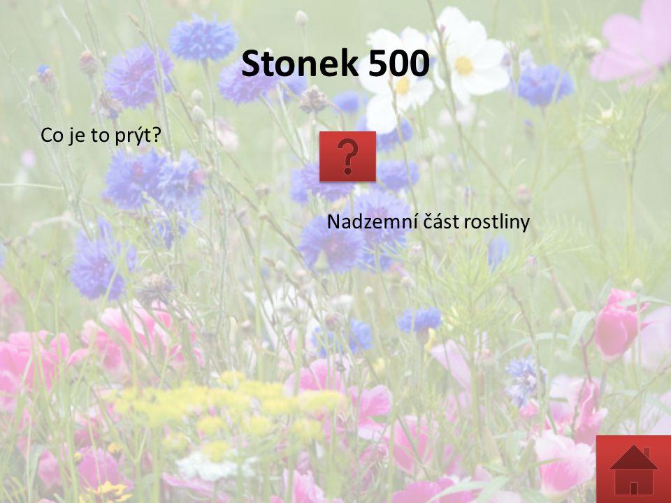 Stonek 500 Co je to prýt? Nadzemní část rostliny