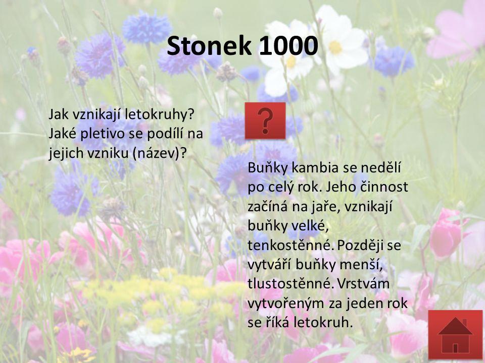 Stonek 1000 Jak vznikají letokruhy? Jaké pletivo se podílí na jejich vzniku (název)? Buňky kambia se nedělí po celý rok. Jeho činnost začíná na jaře,