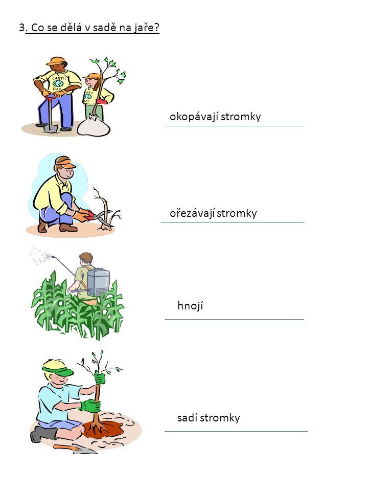 3. Co se dělá v sadě na jaře? okopávají stromky ořezávají stromky hnojí sadí stromky