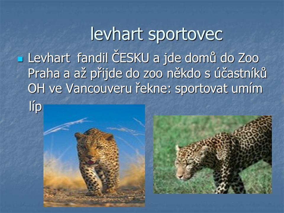 levhart sportovec Levhart fandil ČESKU a jde domů do Zoo Praha a až přijde do zoo někdo s účastníků OH ve Vancouveru řekne: sportovat umím Levhart fan