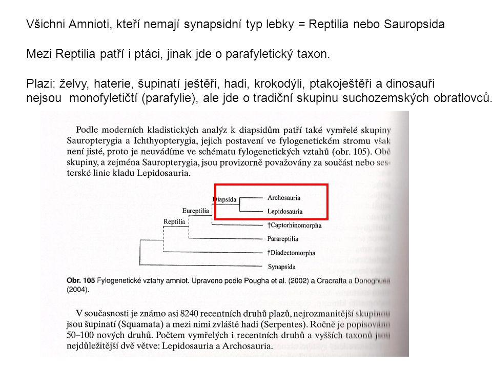 Všichni Amnioti, kteří nemají synapsidní typ lebky = Reptilia nebo Sauropsida Mezi Reptilia patří i ptáci, jinak jde o parafyletický taxon.
