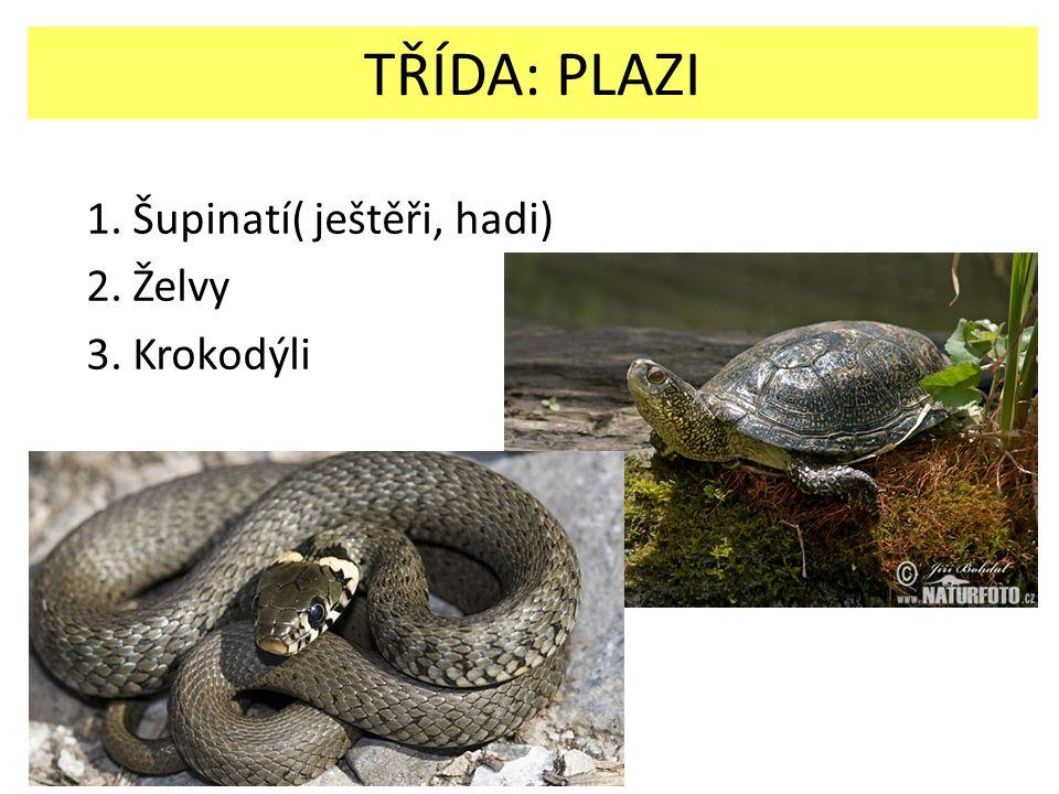 TŘÍDA: PLAZI 1. Šupinatí( ještěři, hadi) 2. Želvy 3. Krokodýli