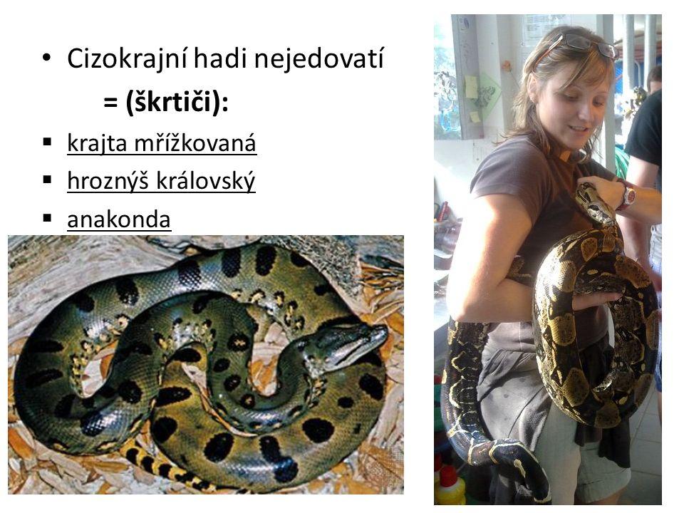 Cizokrajní hadi nejedovatí = (škrtiči):  krajta mřížkovaná  hroznýš královský  anakonda