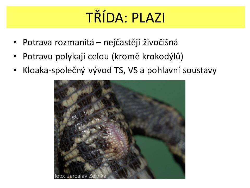 Potrava rozmanitá – nejčastěji živočišná Potravu polykají celou (kromě krokodýlů) Kloaka-společný vývod TS, VS a pohlavní soustavy TŘÍDA: PLAZI