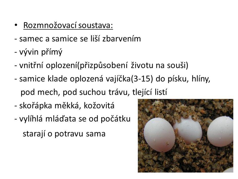 Rozmnožovací soustava: - samec a samice se liší zbarvením - vývin přímý - vnitřní oplození(přizpůsobení životu na souši) - samice klade oplozená vajíč