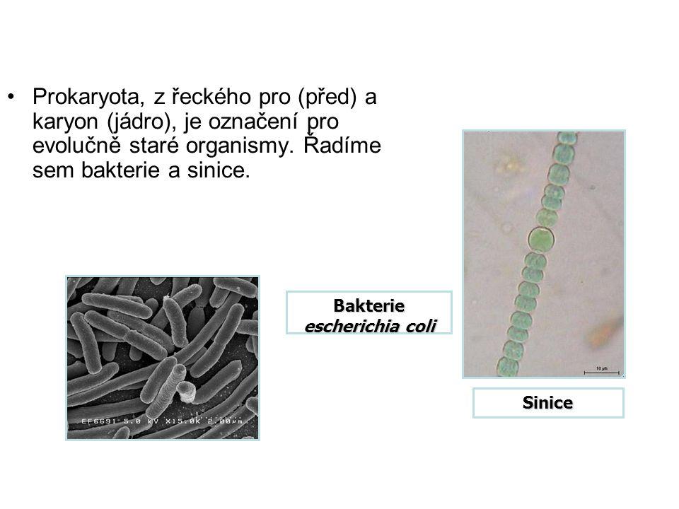 Prokaryota, z řeckého pro (před) a karyon (jádro), je označení pro evolučně staré organismy.