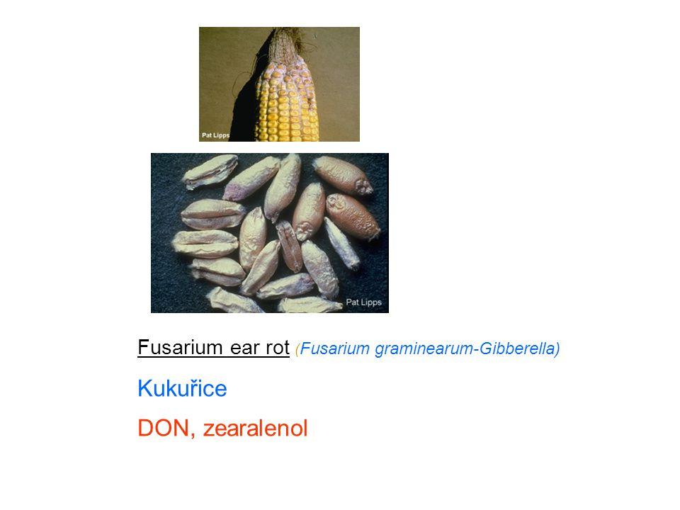 Fusarium ear rot ( Fusarium graminearum-Gibberella) Kukuřice DON, zearalenol
