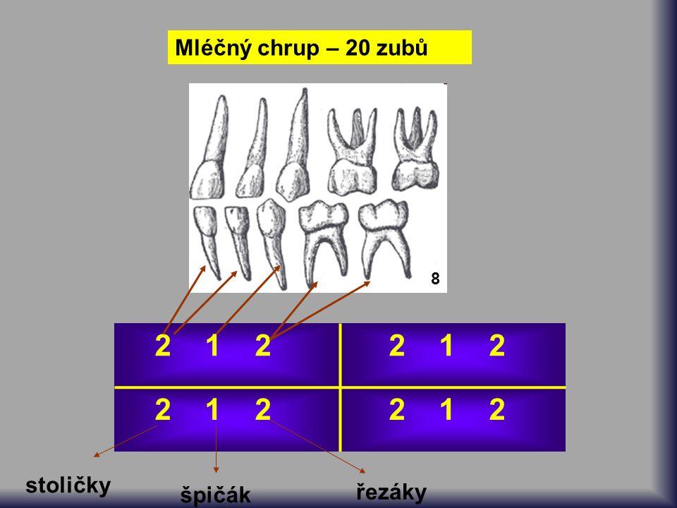 Mléčný chrup – 20 zubů 8 2 1 2 řezáky špičák stoličky