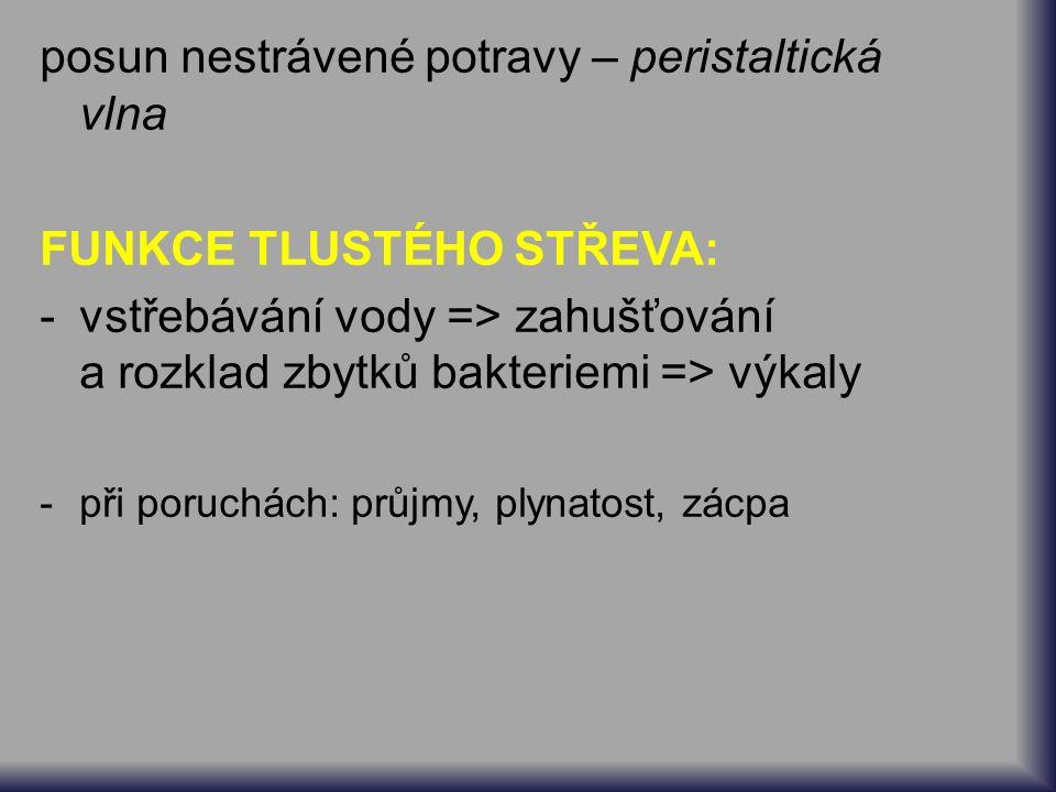 posun nestrávené potravy – peristaltická vlna FUNKCE TLUSTÉHO STŘEVA: -vstřebávání vody => zahušťování a rozklad zbytků bakteriemi => výkaly -při poruchách: průjmy, plynatost, zácpa