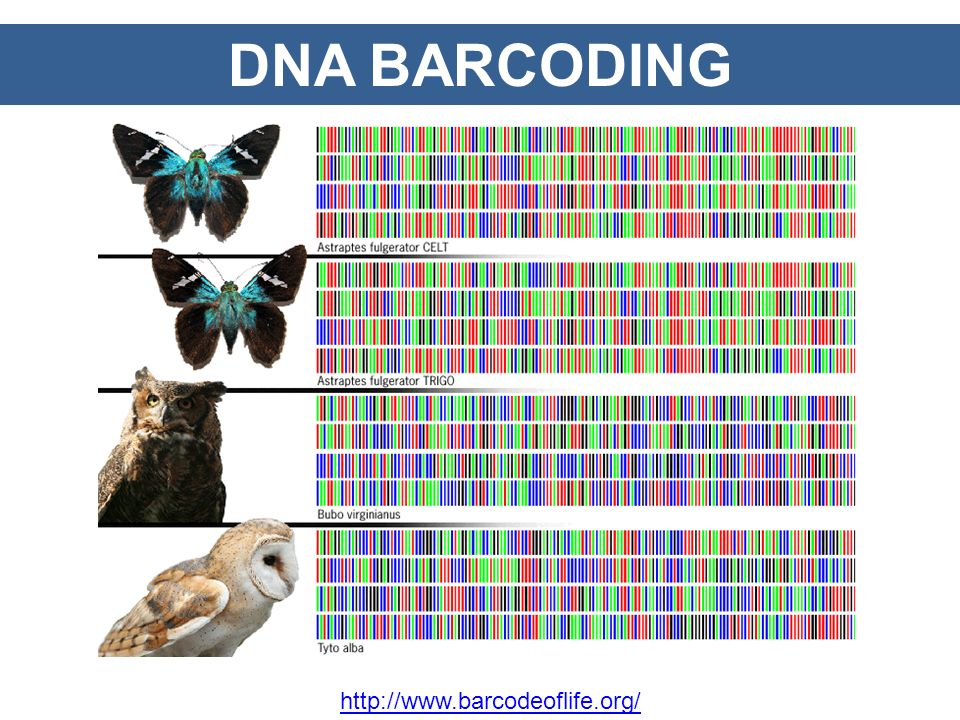 DNA BARCODING http://www.barcodeoflife.org/