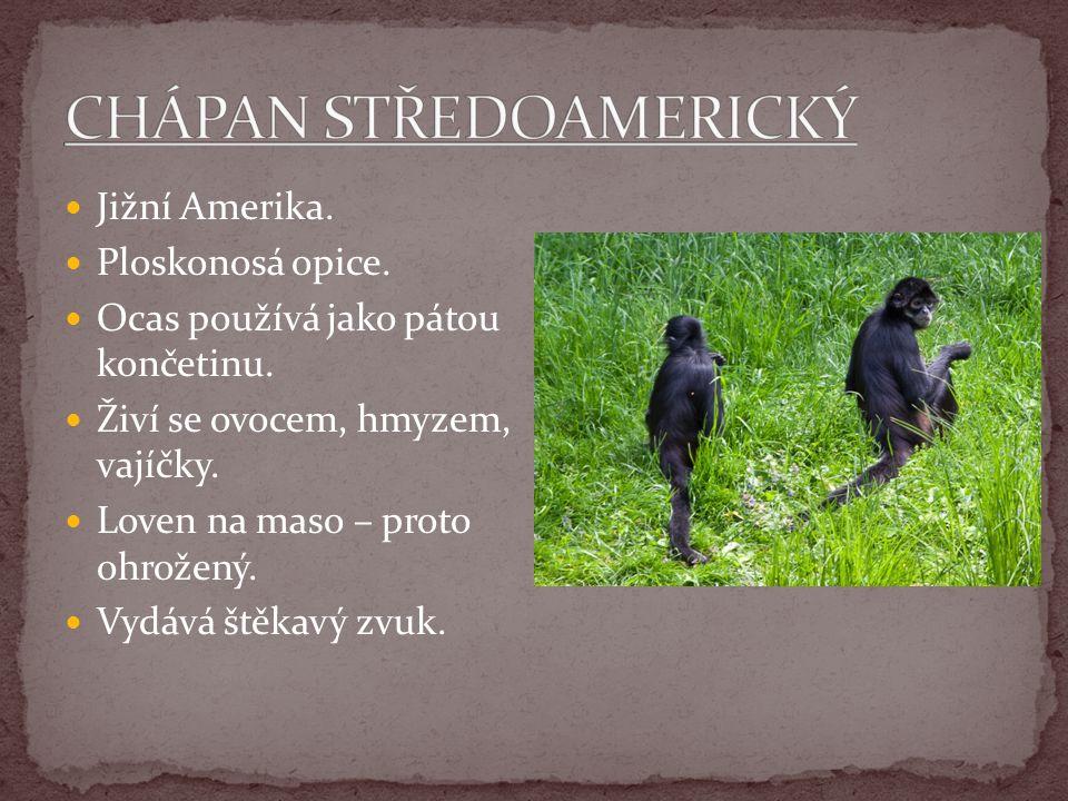 Jižní Amerika. Ploskonosá opice. Ocas používá jako pátou končetinu. Živí se ovocem, hmyzem, vajíčky. Loven na maso – proto ohrožený. Vydává štěkavý zv