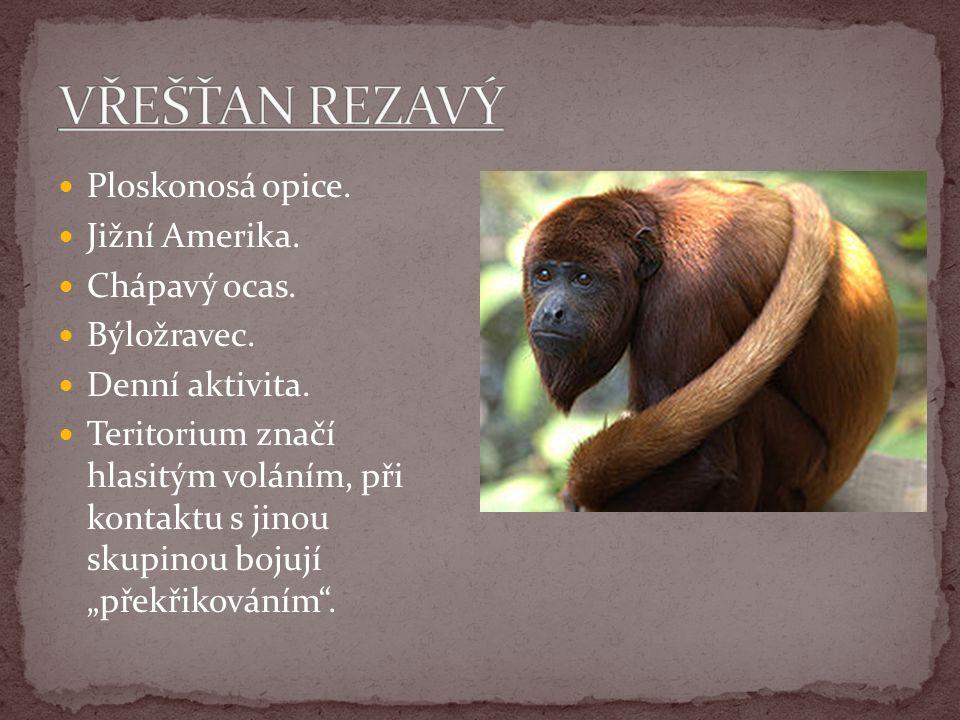 """Ploskonosá opice. Jižní Amerika. Chápavý ocas. Býložravec. Denní aktivita. Teritorium značí hlasitým voláním, při kontaktu s jinou skupinou bojují """"př"""