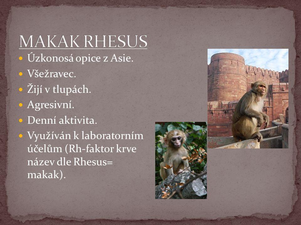 Úzkonosá opice z Asie. Všežravec. Žijí v tlupách. Agresivní. Denní aktivita. Využíván k laboratorním účelům (Rh-faktor krve název dle Rhesus= makak).