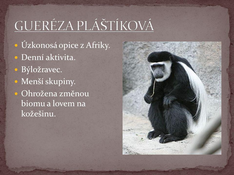Úzkonosá opice z Afriky. Denní aktivita. Býložravec. Menší skupiny. Ohrožena změnou biomu a lovem na kožešinu.