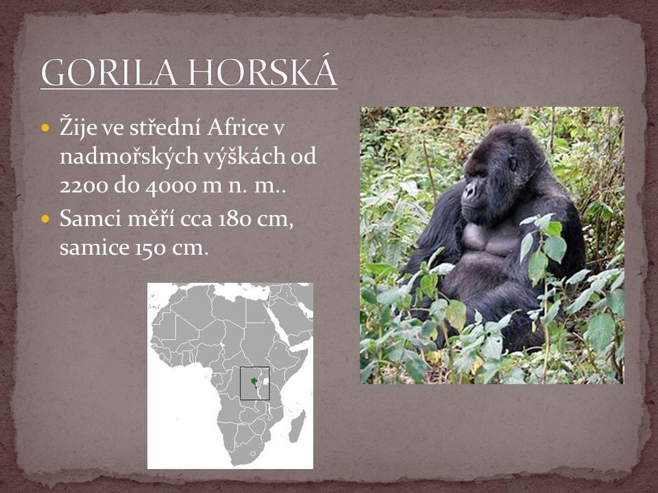 Žije ve střední Africe v nadmořských výškách od 2200 do 4000 m n. m.. Samci měří cca 180 cm, samice 150 cm.