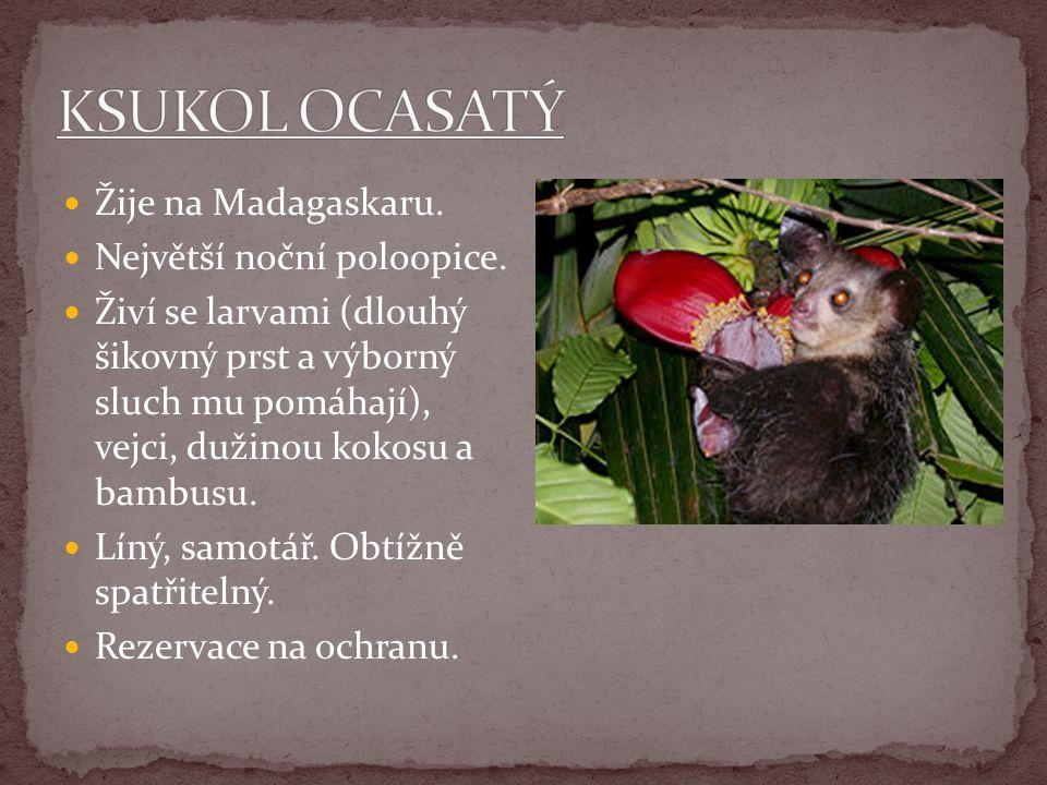 Žije na Madagaskaru. Největší noční poloopice. Živí se larvami (dlouhý šikovný prst a výborný sluch mu pomáhají), vejci, dužinou kokosu a bambusu. Lín