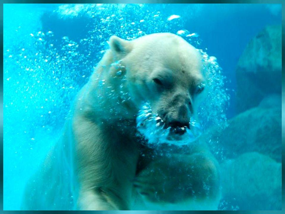 Největší MEDVĚD ? Grizzly Hnědý Lední