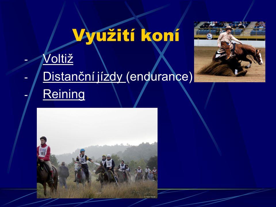 Využití koní - Voltiž - Distanční jízdy (endurance) - Reining